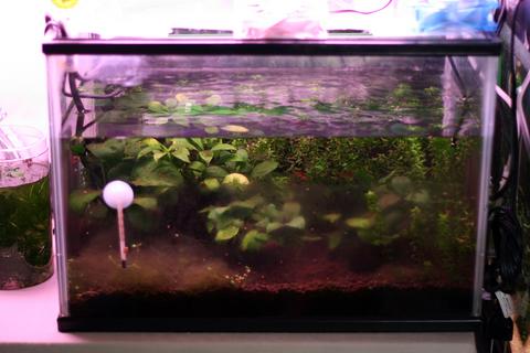 20100927アクアリウム(40水槽)レッドチェリーシュリンプ水槽リセット前.JPG