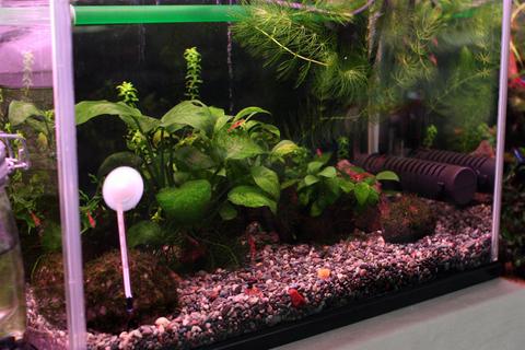 20101013アクアリウム(40水槽)水上葉水草植える前植栽前.JPG