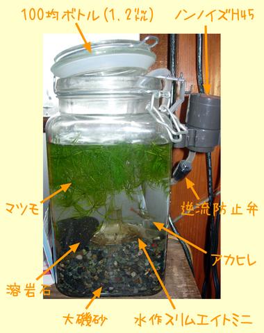 20101110アクアリウム(ボトルアクア)アカヒレボトル構成.JPG