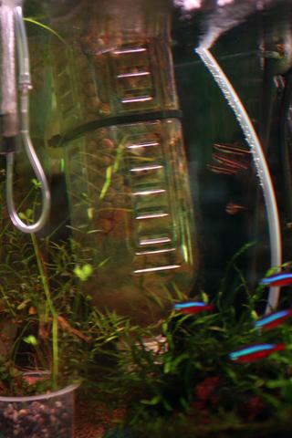 20110118アクアリウム(60水槽)生物濾過増殖炉強化.JPG
