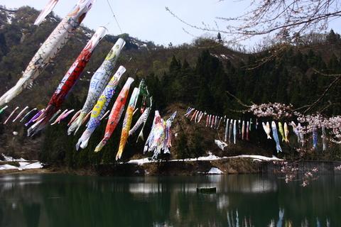 20110507子供の日(大崎ダム)鯉のぼり.JPG