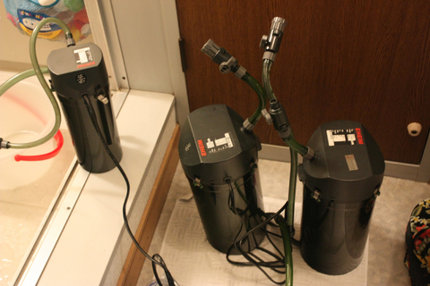 20100609アクアリウム(60水槽)黒髭苔除去外部フィルター掃除2.JPG