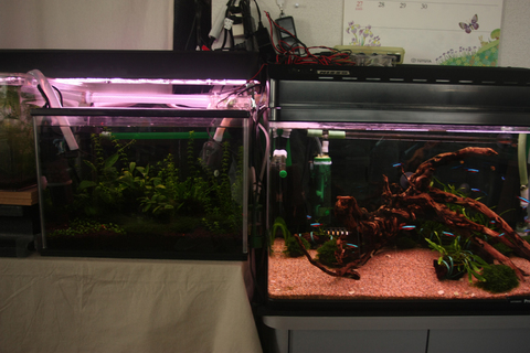 20100618アクアリウム(水槽)水草レイアウト流木.JPG