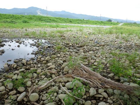 20100914アクアリウム(流木採取)河原.JPG