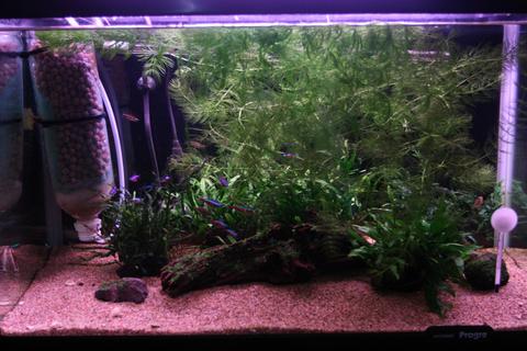 20101229アクアリウム(60水槽)水槽緑苔藍藻緑藻掃除前.JPG