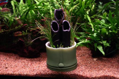 20110103アクアリウム(お正月)水槽用水草門松水槽飾り付け1.JPG