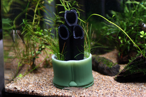20110131アクアリウム(60水槽)お正月水槽用お手製水草門松.JPG