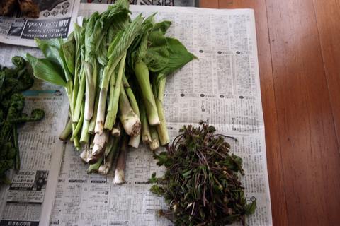 20110506原始の森(山菜採り)収穫 うるい 木の芽.JPG