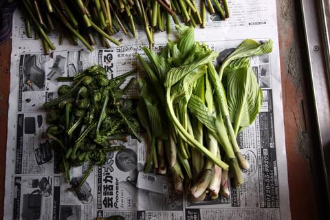 20110506原始の森(山菜採り)収穫 こごめ こごみ うるい.JPG