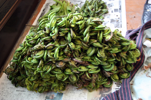 20110506原始の森(山菜採り)収穫 ぜんまい.JPG