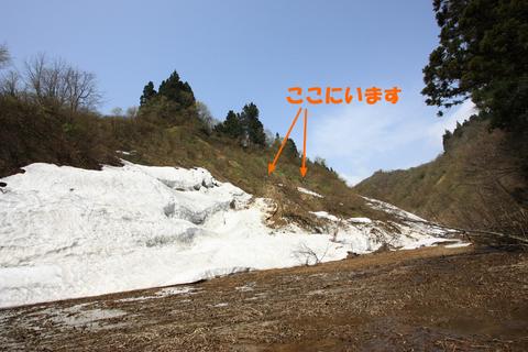 20110506原始の森(山菜採り)山1.JPG