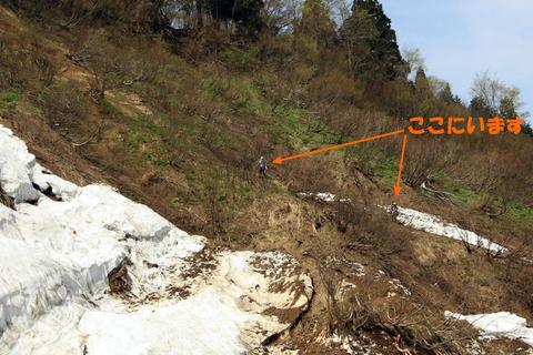 20110506原始の森(山菜採り)山2.JPG