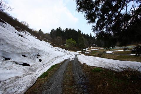 20110506原始の森(山菜採り)残雪の農道.JPG